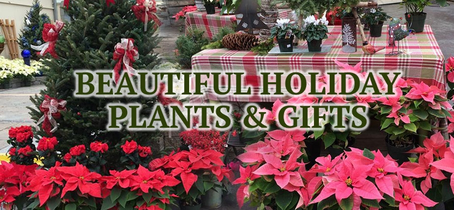 Beautiful Holiday Plants & Gifts from Attleboro Farms