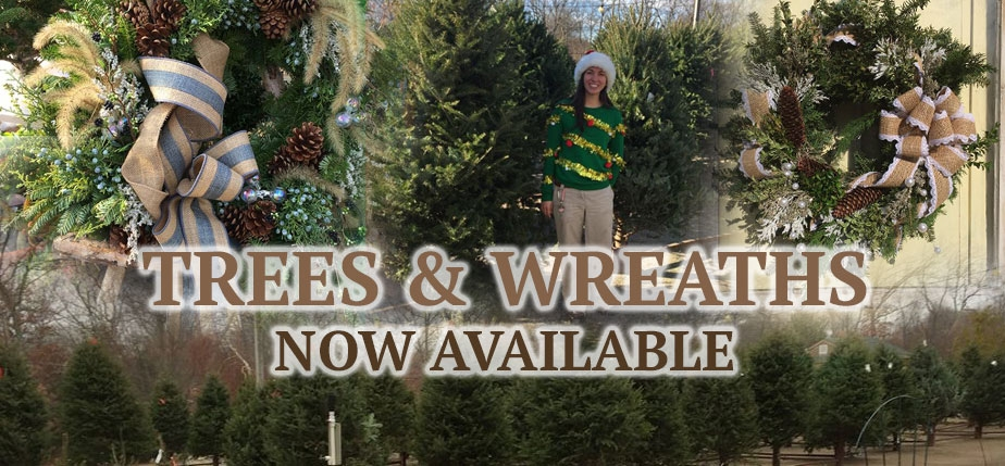 Christmas Trees Holiday Wreaths available at Attleboro Farms MA